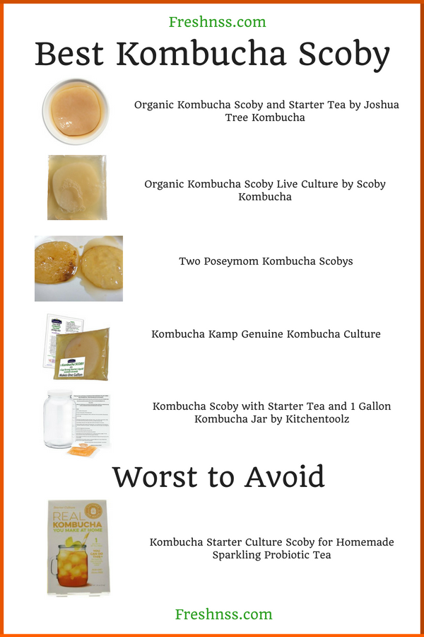 Best Kombucha Scoby Reviews