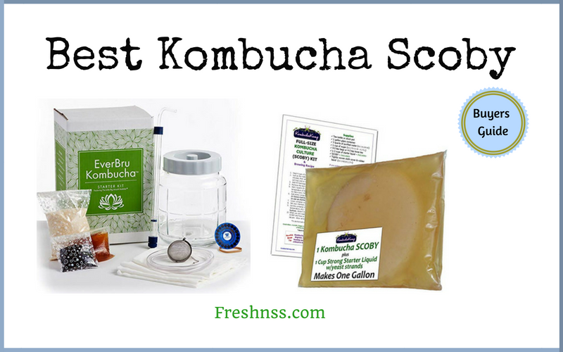 Best Kombucha Scoby (2020 Buyers Guide)