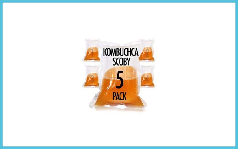 Organic Kombucha Scoby And Starter Tea By Joshua Tree Kombucha Review